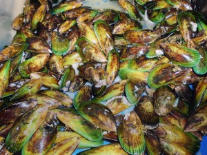 New Zealand mussels we bought
